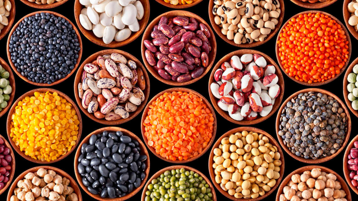 All you need to know about plant protein